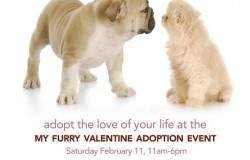 My Furry Valentine 2012 - Pet Adoption Event - Cincinnati